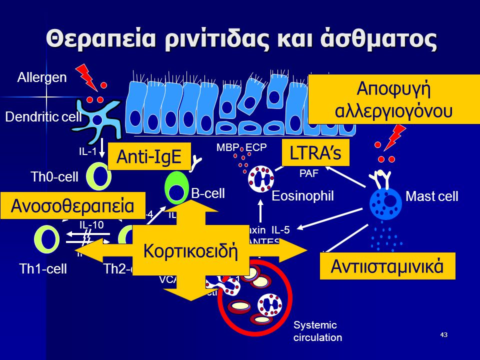 43 Θεραπεία ρινίτιδας και άσθματος Dendritic cell Th1-cellTh2-cell IFN-  IL-10 IL-1 Th0-cell VCAM-1 ICAM-1 E-selectin IL-4 IL-13 B-cell IgE Allergen Mast cell histamin LTs PGs PAF Eotaxin IL-5 RANTES Eosinophil MBP ECP Systemic circulation LTRA's Αντιισταμινικά Anti-IgE Κορτικοειδή Αποφυγή αλλεργιογόνου Ανοσοθεραπεία