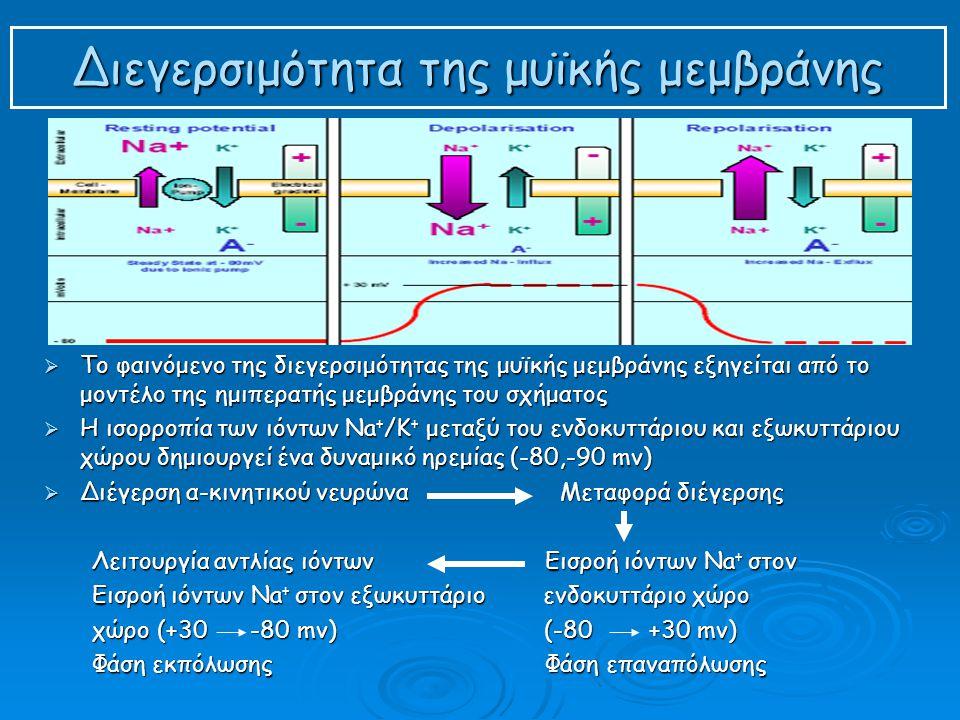 Διεγερσιμότητα της μυϊκής μεμβράνης  Το φαινόμενο της διεγερσιμότητας της μυϊκής μεμβράνης εξηγείται από το μοντέλο της ημιπερατής μεμβράνης του σχήματος  Η ισορροπία των ιόντων Na + /Κ + μεταξύ του ενδοκυττάριου και εξωκυττάριου χώρου δημιουργεί ένα δυναμικό ηρεμίας (-80,-90 mv)  Διέγερση α-κινητικού νευρώνα Μεταφορά διέγερσης Λειτουργία αντλίας ιόντων Εισροή ιόντων Na + στον Εισροή ιόντων Na + στον εξωκυττάριο ενδοκυττάριο χώρο χώρο (+30 -80 mv) (-80 +30 mv) Φάση εκπόλωσης Φάση επαναπόλωσης