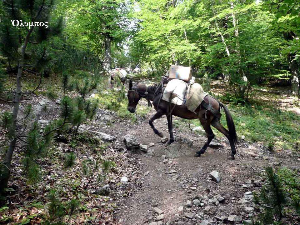 Η μεταφορά των τροφίμων στα καταφύγια Σ.Ε.Ο. ή Γιόσος Αποστολίδης και Χρήστος Κάκκαλος Περίπου 5,30 ώρες περπάτημα ύψος 1850μ...