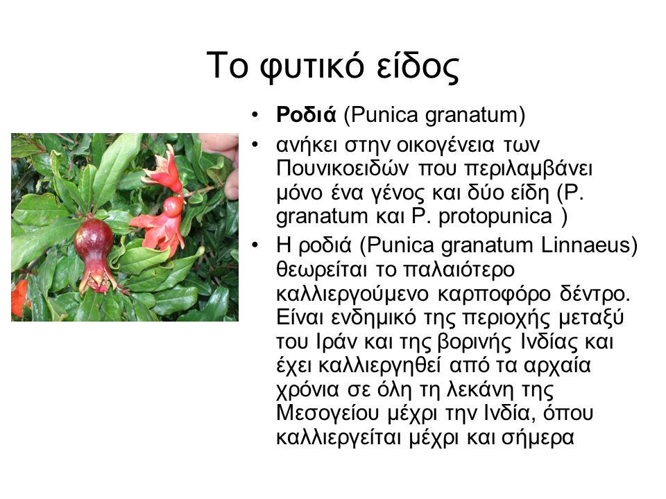 Το φυτικό είδος •Ροδιά (Punica granatum) •ανήκει στην οικογένεια των Πουνικοειδών που περιλαμβάνει μόνο ένα γένος και δύο είδη (P. granatum και P. pro