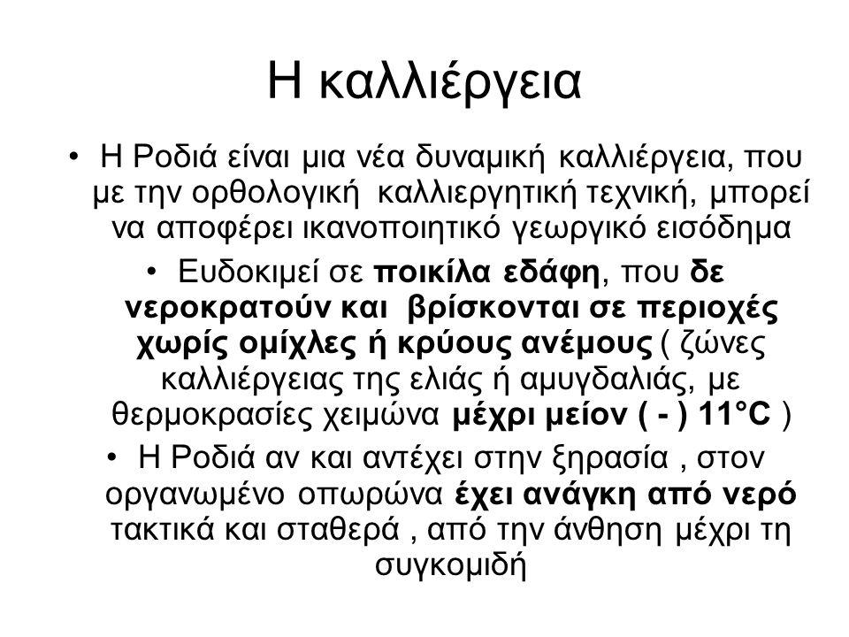 Ποικιλίες Ροδιάς •Ερμιόνη (Aφράτη) (Ελληνική, γλυκιά, λευκοκίτρινη, για νωπή κατανάλωση) •Akko, ( Ισραήλ, κόκκινη, γλυκιά, για νωπή κατανάλωση) •Wonderful (όψιμη, κόκκινη, γλυκόξινη, διπλής χρήσης) •Hicaz (όψιμη, κόκκινη, γλυκόξινη, διπλής χρήσης) •Ελληνικές επιλογές