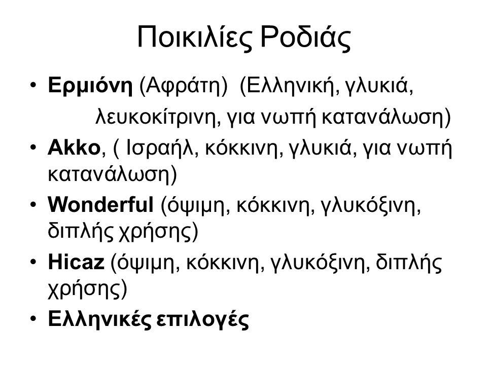 Ποικιλίες Ροδιάς •Ερμιόνη (Aφράτη) (Ελληνική, γλυκιά, λευκοκίτρινη, για νωπή κατανάλωση) •Akko, ( Ισραήλ, κόκκινη, γλυκιά, για νωπή κατανάλωση) •Wonde