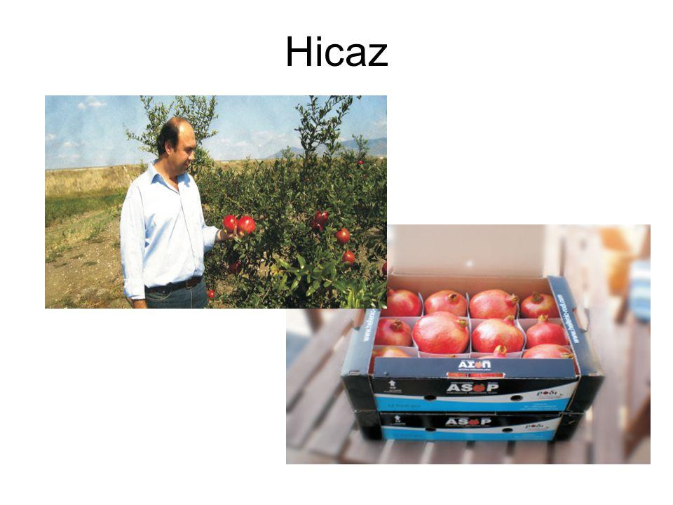 Ανακεφαλαίωση •Η Ροδιά είναι μια εναλλακτική, δυναμική καλλιέργεια, στα πλαίσια συμβολαιακής γεωργίας •Προσαρμόζεται σε ποικιλία εδαφοκλιματικών συνθηκών και χρειάζεται άρδευση •Η διαχείριση της καλλιέργειας είναι εφικτή χωρίς ιδιαίτερες δυσκολίες •Η παραγωγή έχει ευνοϊκές προοπτικές αξιοποίησης και κυρίως εξαγωγικό προσανατολισμό