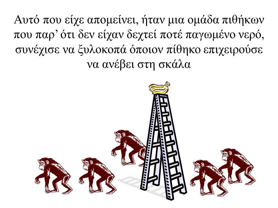 Στη συνέχεια αντικαταστάθηκε και 2ος πίθηκος και συνέβη το ίδιο με τον 1ο πίθηκο να συμμετέχει στο ξυλοκόπημα του δεύτερου. Άλλαξε και 3ος πίθηκος και