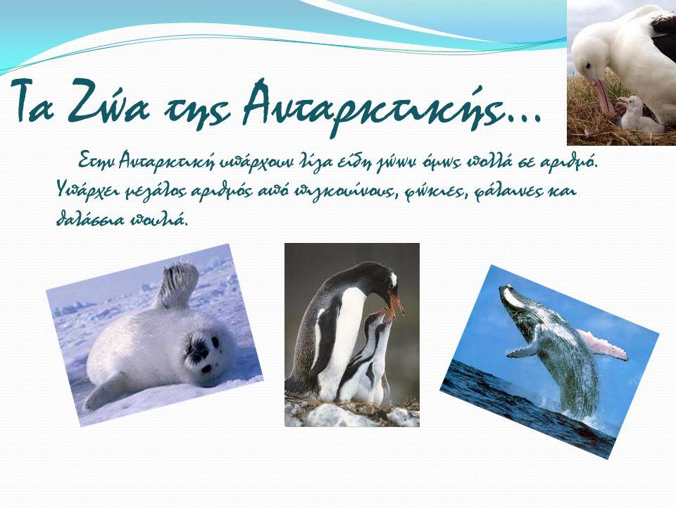 Τα Ζώα της Ανταρκτικής... Στην Ανταρκτική υπάρχουν λίγα είδη ζώων όμως πολλά σε αριθμό. Υπάρχει μεγάλος αριθμός από πιγκουίνους, φώκιες, φάλαινες και
