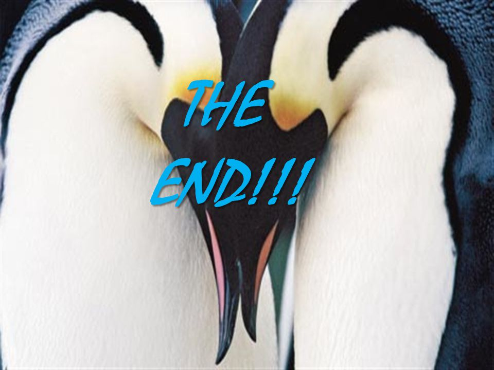 THE END!!! THE END!!!