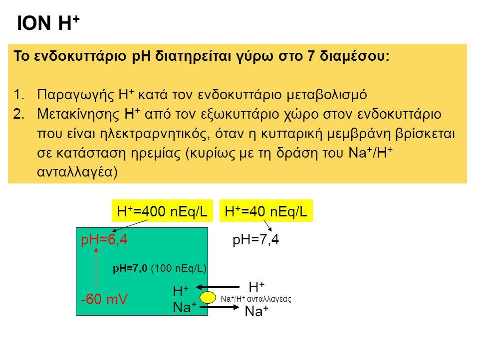 ION H + Το ενδοκυττάριο pH διατηρείται γύρω στο 7 διαμέσου: 1.Παραγωγής Η + κατά τον ενδοκυττάριο μεταβολισμό 2.Μετακίνησης Η + από τον εξωκυττάριο χώ