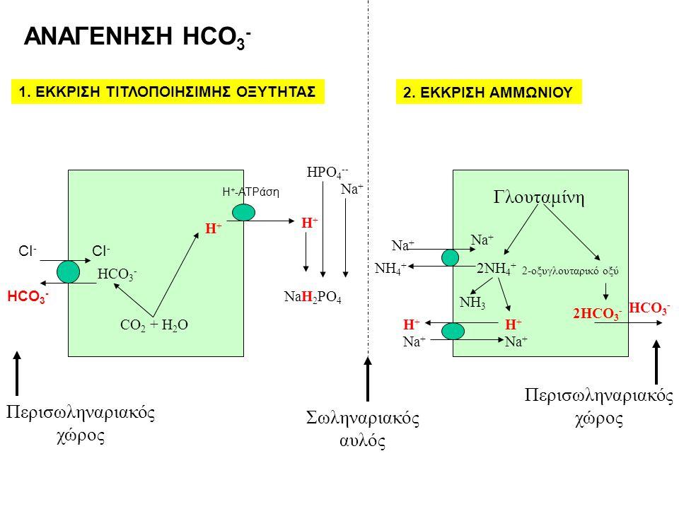 Γλουταμίνη 2ΝH 4 + 2-οξυγλουταρικό οξύ 2HCO 3 - ΝH3ΝH3 H+H+ Na + H+H+ ΝH4+ΝH4+ Σωληναριακός αυλός Περισωληναριακός χώρος Η + -ATPάση CO 2 + H 2 O HCO
