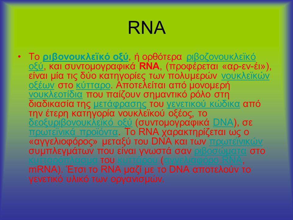 RNA •Τo ριβονουκλεϊκό οξύ, ή ορθότερα ριβοζονουκλεϊκό οξύ, και συντομογραφικά RNA, (προφέρεται «αρ-εν-έι»), είναι μία τις δύο κατηγορίες των πολυμερών