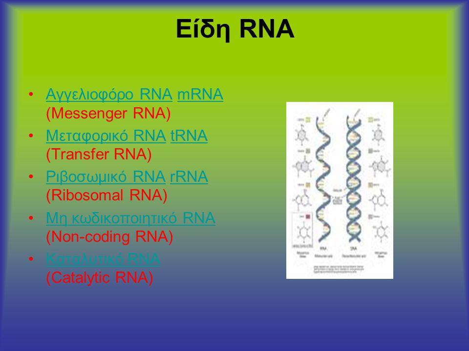 Είδη RNA •Αγγελιοφόρο RNA mRNA (Messenger RNA)Αγγελιοφόρο RNAmRNA •Μεταφορικό RNA tRNA (Transfer RNA)Μεταφορικό RNAtRNA •Ριβοσωμικό RNA rRNA (Ribosoma