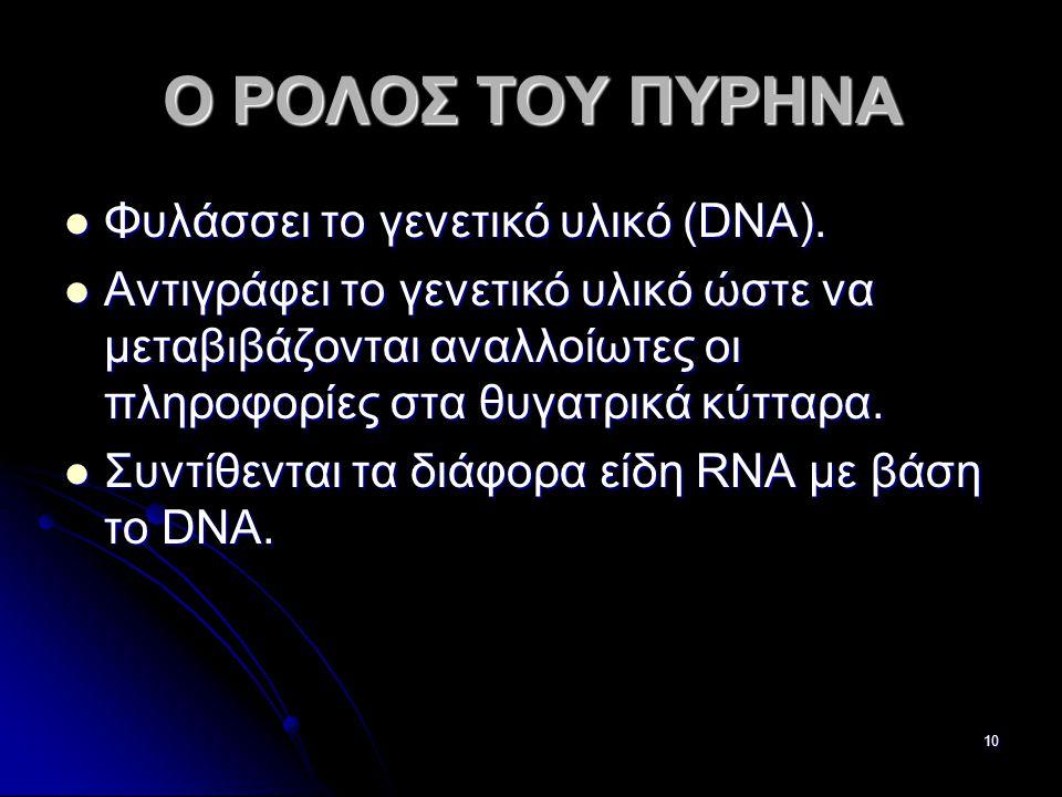 Παν. Πάλλα - ΕΚΦΕ Ν. ΣΜΥΡΝΗΣ10 Ο ΡΟΛΟΣ ΤΟΥ ΠΥΡΗΝΑ  Φυλάσσει το γενετικό υλικό (DNA).  Aντιγράφει το γενετικό υλικό ώστε να μεταβιβάζονται αναλλοίωτε