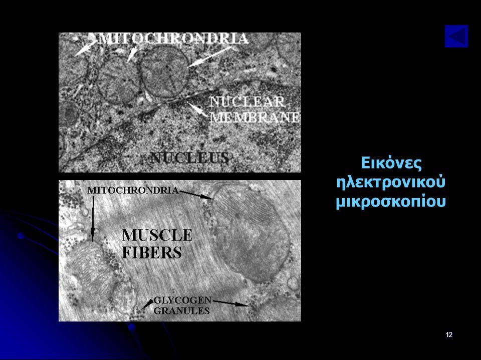Παν. Πάλλα - ΕΚΦΕ Ν. ΣΜΥΡΝΗΣ12 Εικόνες ηλεκτρονικού μικροσκοπίου