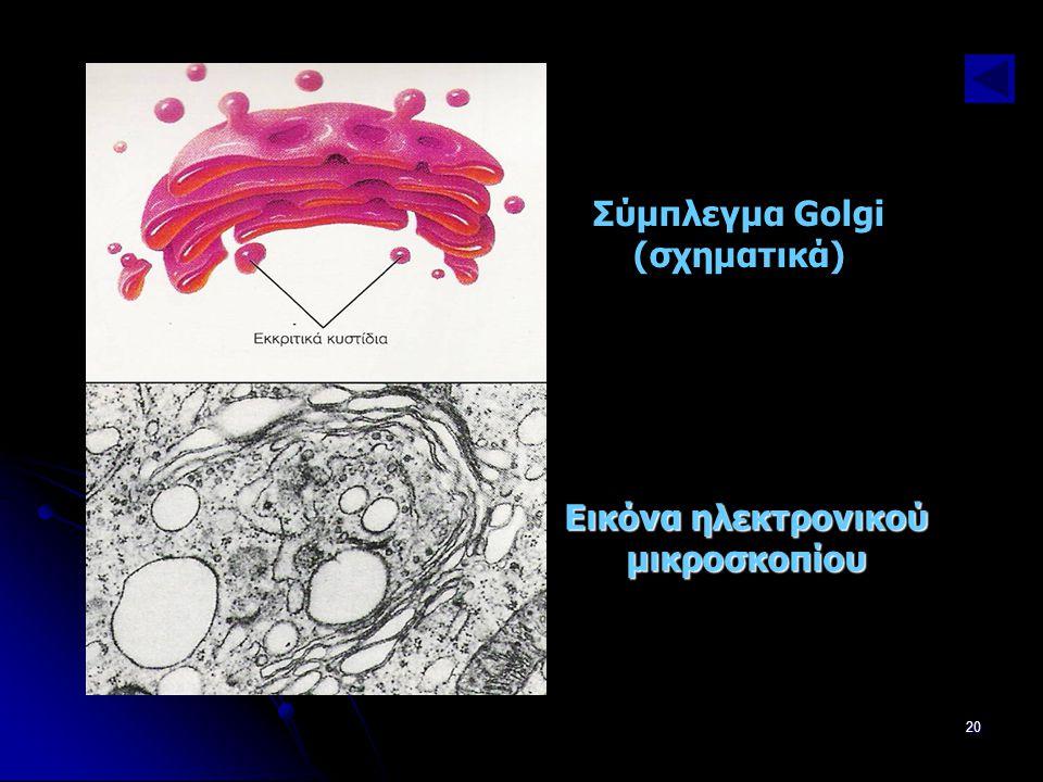 Παν. Πάλλα - ΕΚΦΕ Ν. ΣΜΥΡΝΗΣ20 Εικόνα ηλεκτρονικού μικροσκοπίου Σύμπλεγμα Golgi (σχηματικά)