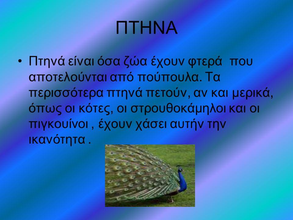 ΠΤΗΝΑ •Πτηνά είναι όσα ζώα έχουν φτερά που αποτελούνται από πούπουλα.