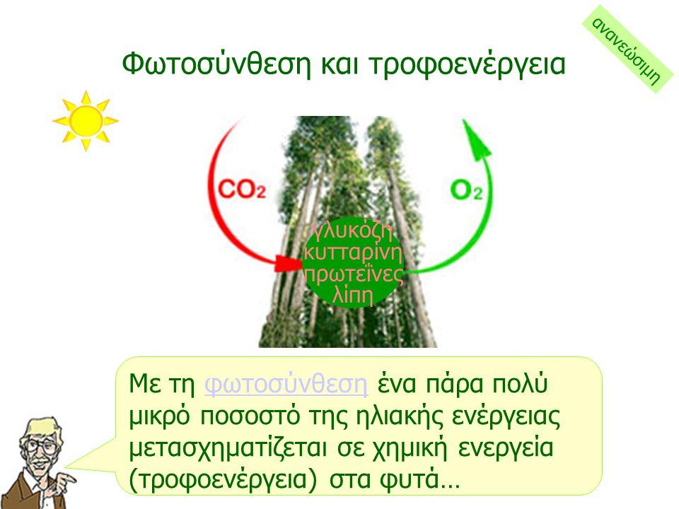 Στα φύλλα, με την ηλιακή ενέργεια που δεσμεύει η χλωροφύλλη, τα φυτά δημιουργούν με τη διαδικασία της φωτοσύνθεσης τροφή για να αναπτυχθούν… Η ηλιακή ενέργεια στα φυτά… ανανεώσιμη