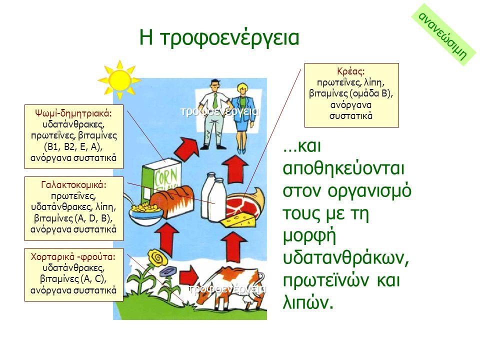 Τα πράσινα φυτά καταναλώνονται από τα ζώα και από τους ανθρώπους… Η τροφοενέργεια ανανεώσιμη