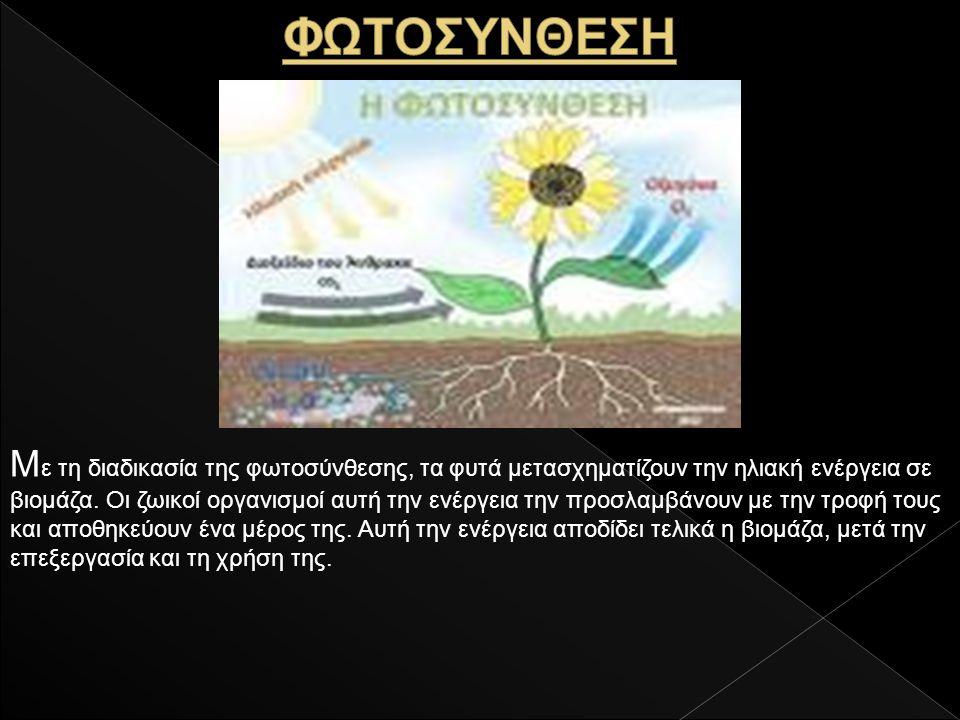 Μ ε τη διαδικασία της φωτοσύνθεσης, τα φυτά μετασχηματίζουν την ηλιακή ενέργεια σε βιομάζα.