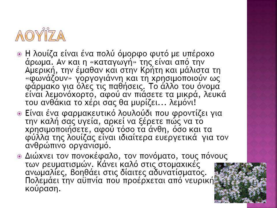  Το δεντρολίβανο είναι αυτοφυές και αειθαλές φυτό, γνωστό από την αρχαιότητα στη Ρώμη και στην Ελλάδα, που το χρησιμοποιούσαν και στην ιατρική και στη μαγειρική.