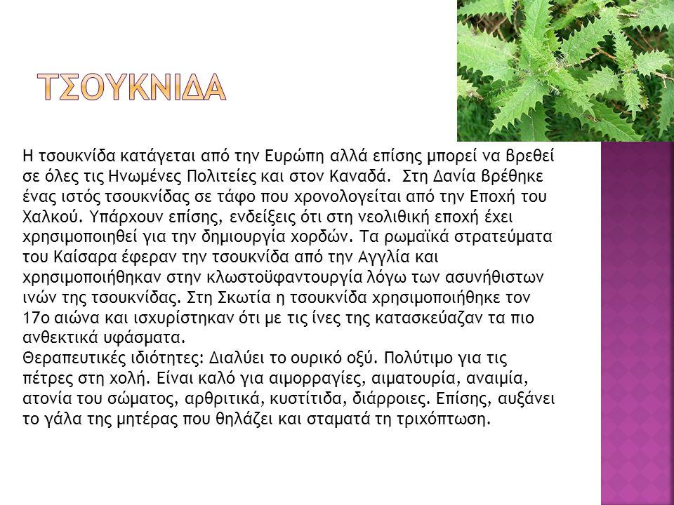  Η λουίζα είναι ένα πολύ όμορφο φυτό με υπέροχο άρωμα.