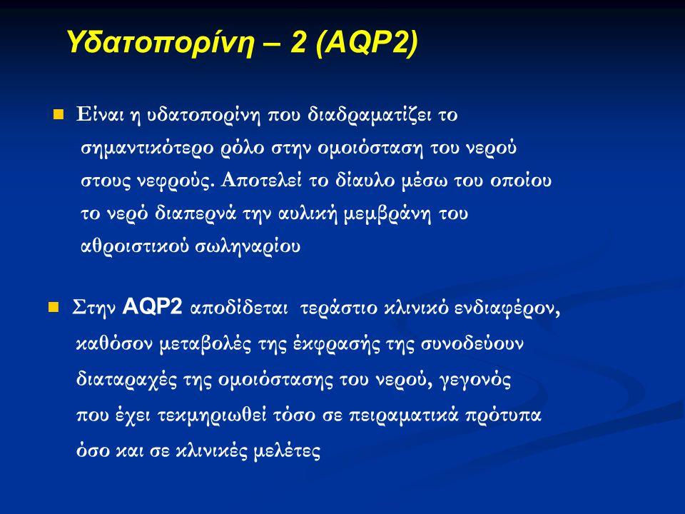 Υδατοπορίνη – 2 (AQP2)  Είναι η υδατοπορίνη που διαδραματίζει το σημαντικότερο ρόλο στην ομοιόσταση του νερού στους νεφρούς. Αποτελεί το δίαυλο μέσω