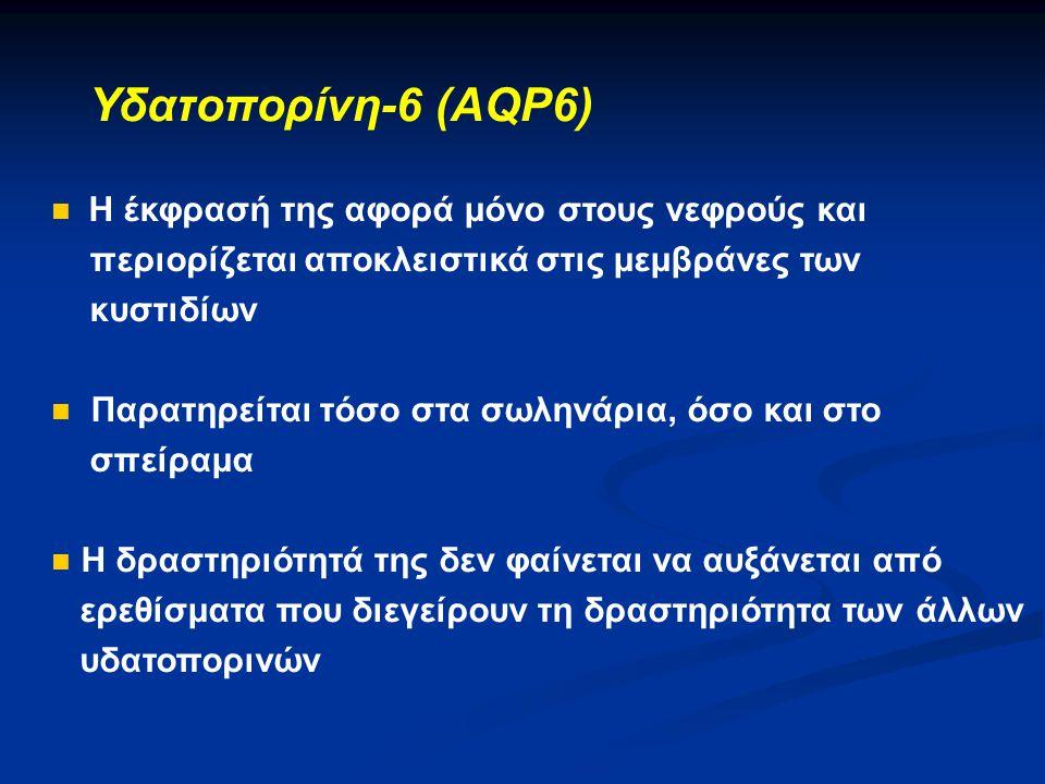 Υδατοπορίνη-6 (AQP6)  Η έκφρασή της αφορά μόνο στους νεφρούς και περιορίζεται αποκλειστικά στις μεμβράνες των κυστιδίων  Παρατηρείται τόσο στα σωλην