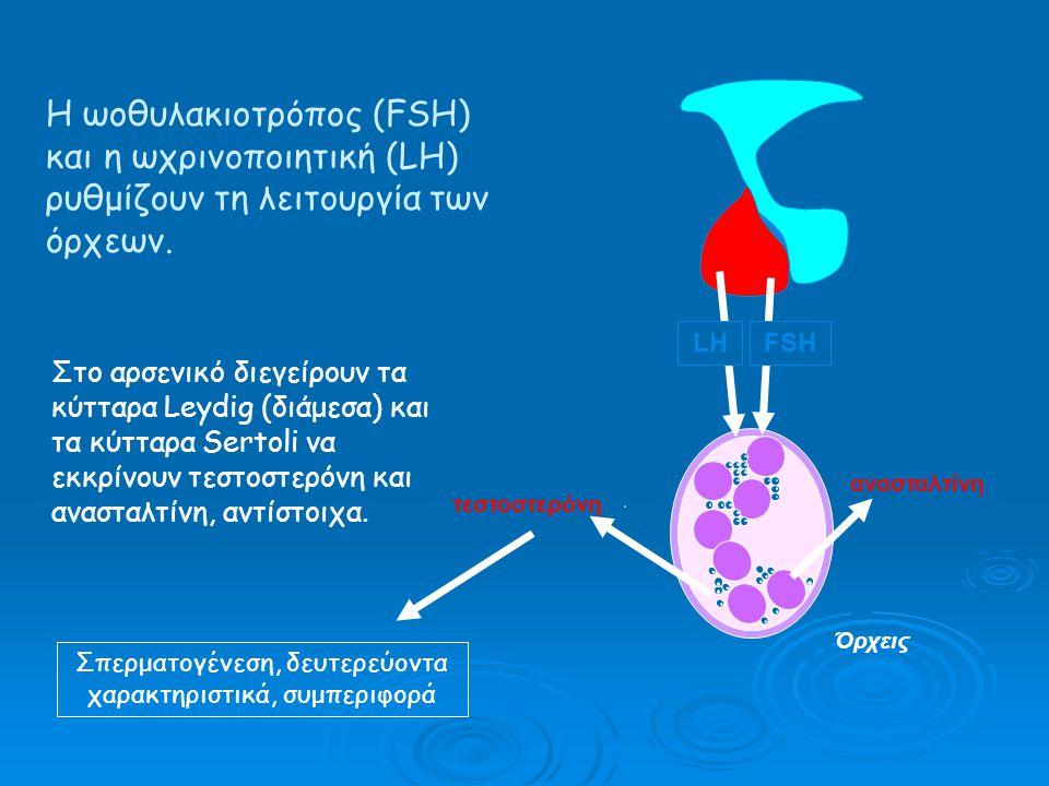 Δράσεις ανδρογόνων  Διέγερση και διατήρηση της σπερματογένεσης  Ανάπτυξη πέους, οσχέου, επικουρικών γεννητικών αδένων και δευτερευόντων χαρακτηριστικών του φύλου  Σύνθεση πρωτεϊνών, αύξηση μεταβολισμού