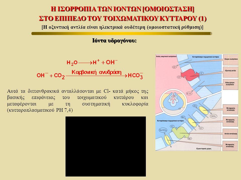Η ΙΣΟΡΡΟΠΙΑ ΤΩΝ ΙΟΝΤΩΝ [ΟΜΟΙΟΣΤΑΣΗ] ΣΤΟ ΕΠΙΠΕΔΟ ΤΟΥ ΤΟΙΧΩΜΑΤΙΚΟΥ ΚΥΤΤΑΡΟΥ (1) [Η οξυντική αντλία είναι ηλεκτρικά ουδέτερη (ομοιοστατική ρύθμιση)] Ιόντ