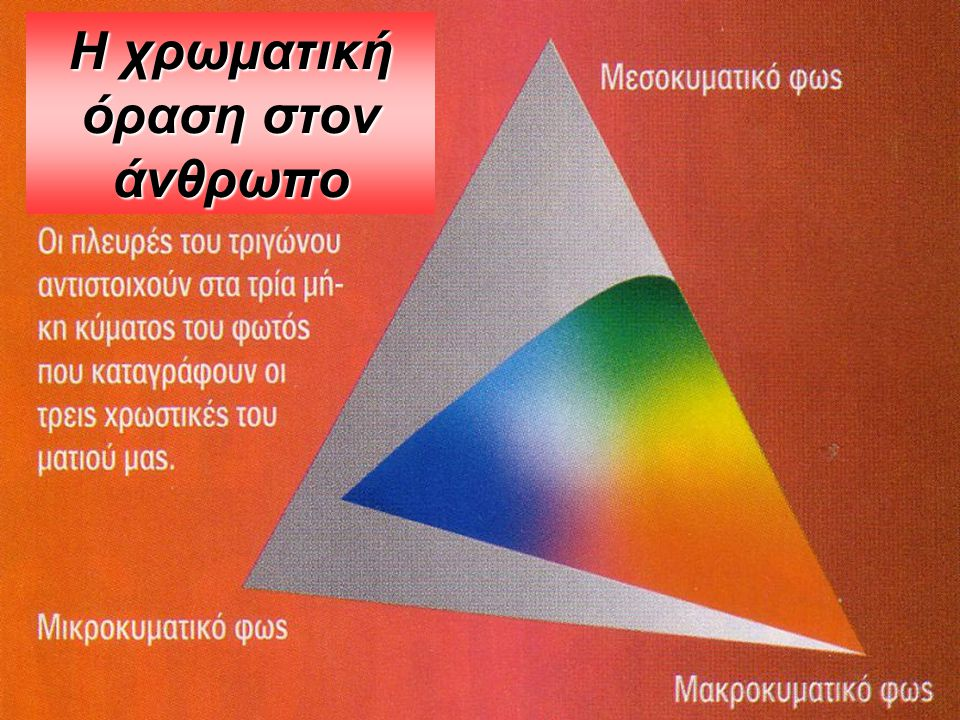 Η χρωματική όραση στον άνθρωπο