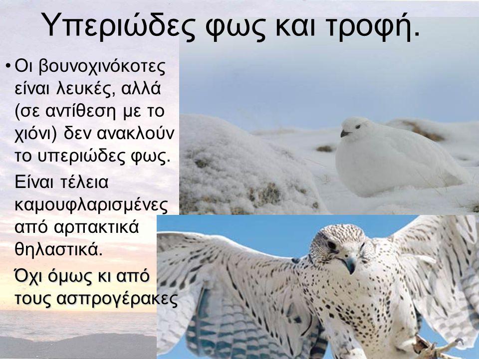 Υπεριώδες φως και τροφή. •Οι βουνοχινόκοτες είναι λευκές, αλλά (σε αντίθεση με το χιόνι) δεν ανακλούν το υπεριώδες φως. Είναι τέλεια καμουφλαρισμένες