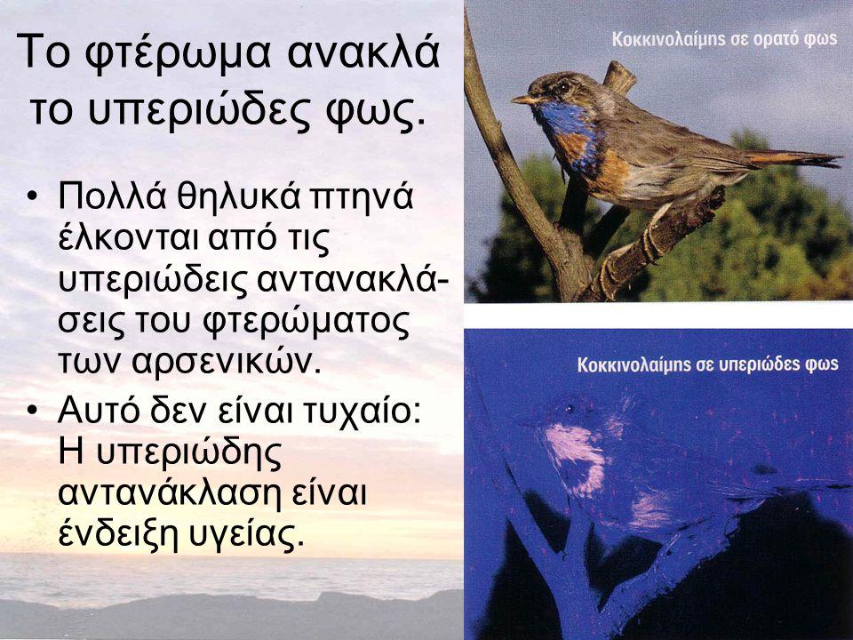 Το φτέρωμα ανακλά το υπεριώδες φως. •Πολλά θηλυκά πτηνά έλκονται από τις υπεριώδεις αντανακλά- σεις του φτερώματος των αρσενικών. •Αυτό δεν είναι τυχα