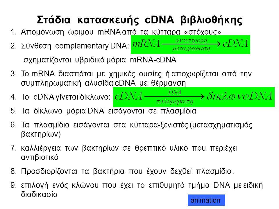 Στάδια κατασκευής cDNA βιβλιοθήκης 1.Απομόνωση ώριμου mRNA από τα κύτταρα «στόχους» 2.Σύνθεση complementary DNA: σχηματίζονται υβριδικά μόρια mRNA-cDNA 3.Το mRNA διασπάται με χημικές ουσίες ή αποχωρίζεται από την συμπληρωματική αλυσίδα cDNA με θέρμανση 4.Το cDNA γίνεται δίκλωνο: 5.Τα δίκλωνα μόρια DNA εισάγονται σε πλασμίδια 6.Τα πλασμίδια εισάγονται στα κύτταρα-ξενιστές (μετασχηματισμός βακτηρίων) 7.καλλιέργεια των βακτηρίων σε θρεπτικό υλικό που περιέχει αντιβιοτικό 8.Προσδιορίζονται τα βακτήρια που έχουν δεχθεί πλασμίδιο.