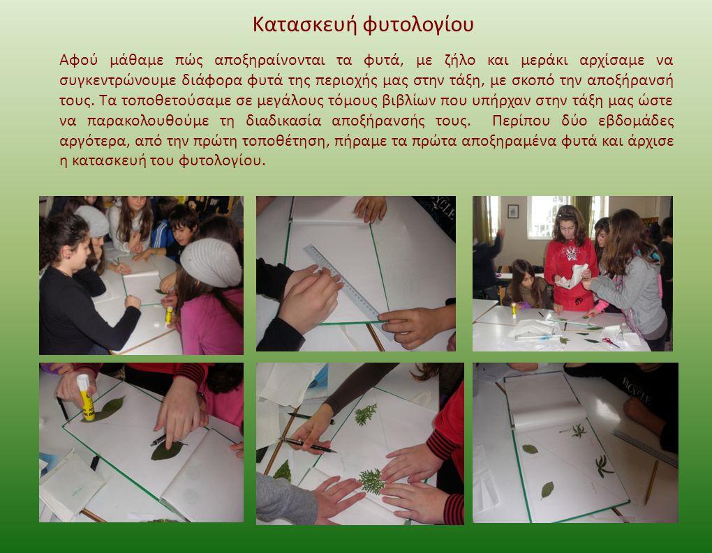 Κατασκευή φυτολογίου Αφού μάθαμε πώς αποξηραίνονται τα φυτά, με ζήλο και μεράκι αρχίσαμε να συγκεντρώνουμε διάφορα φυτά της περιοχής μας στην τάξη, με σκοπό την αποξήρανσή τους.