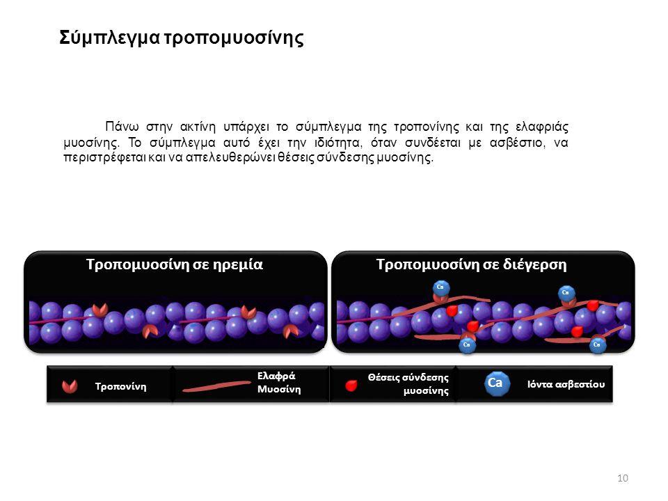 Σύμπλεγμα τροπομυοσίνης Πάνω στην ακτίνη υπάρχει το σύμπλεγμα της τροπονίνης και της ελαφριάς μυοσίνης. Το σύμπλεγμα αυτό έχει την ιδιότητα, όταν συνδ