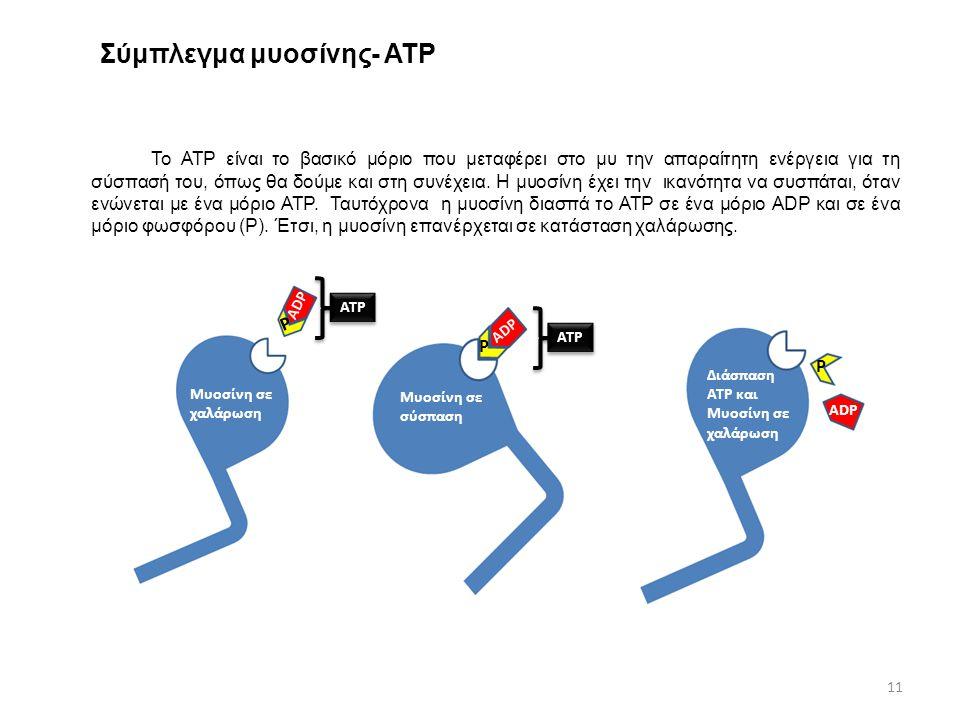 Σύμπλεγμα μυοσίνης- ΑΤΡ Το ΑΤΡ είναι το βασικό μόριο που μεταφέρει στο μυ την απαραίτητη ενέργεια για τη σύσπασή του, όπως θα δούμε και στη συνέχεια.