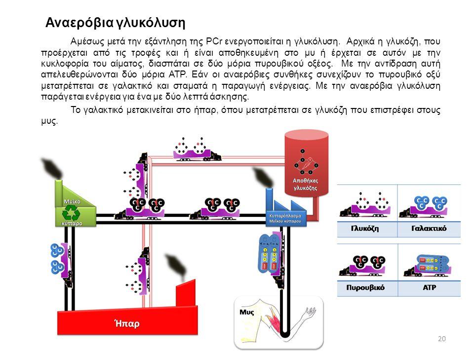 Αναερόβια γλυκόλυση Αμέσως μετά την εξάντληση της PCr ενεργοποιείται η γλυκόλυση. Αρχικά η γλυκόζη, που προέρχεται από τις τροφές και ή είναι αποθηκευ