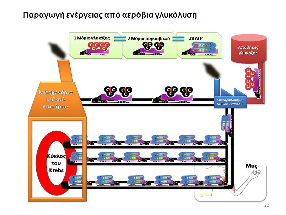 Παραγωγή ενέργειας από αερόβια γλυκόλυση 22