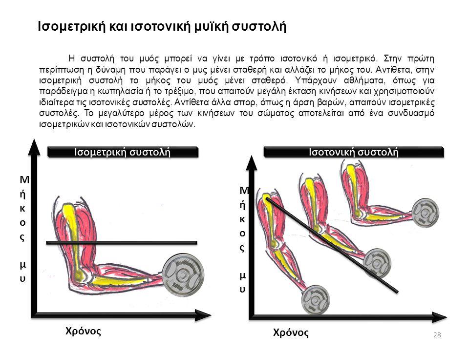 Ισομετρική και ισοτονική μυϊκή συστολή Η συστολή του μυός μπορεί να γίνει με τρόπο ισοτονικό ή ισομετρικό. Στην πρώτη περίπτωση η δύναμη που παράγει ο