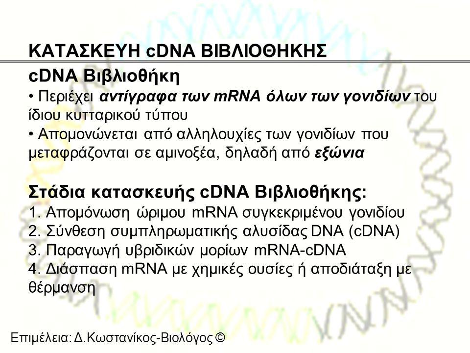 Επιμέλεια: Δ.Κωστανίκος-Βιολόγος © ΚΑΤΑΣΚΕΥΗ cDNA ΒΙΒΛΙΟΘΗΚΗΣ cDNA Βιβλιοθήκη • Περιέχει αντίγραφα των mRNA όλων των γονιδίων του ίδιου κυτταρικού τύπ