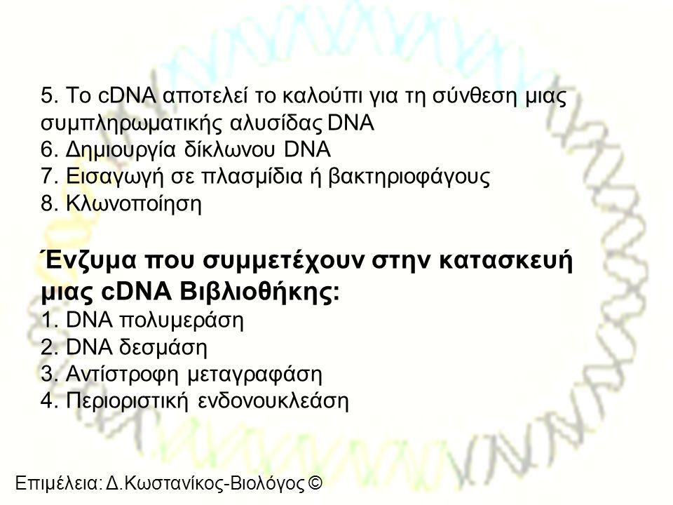 Επιμέλεια: Δ.Κωστανίκος-Βιολόγος © 5. Το cDNA αποτελεί το καλούπι για τη σύνθεση μιας συμπληρωματικής αλυσίδας DNA 6. Δημιουργία δίκλωνου DNA 7. Εισαγ