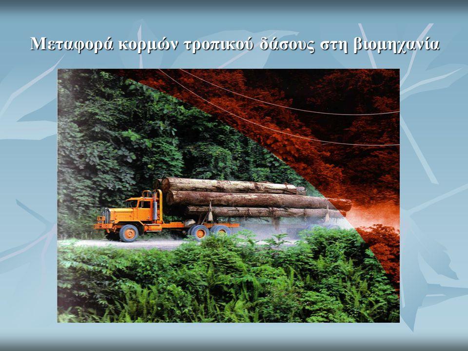 Το μεγαλείο της εσωτερικής αρχιτεκτονικής του ξύλου που υπηρετεί την αειφορία και τη ζωή  Κύτταρα ξύλου οξιάς σε εγκάρσια τομή.