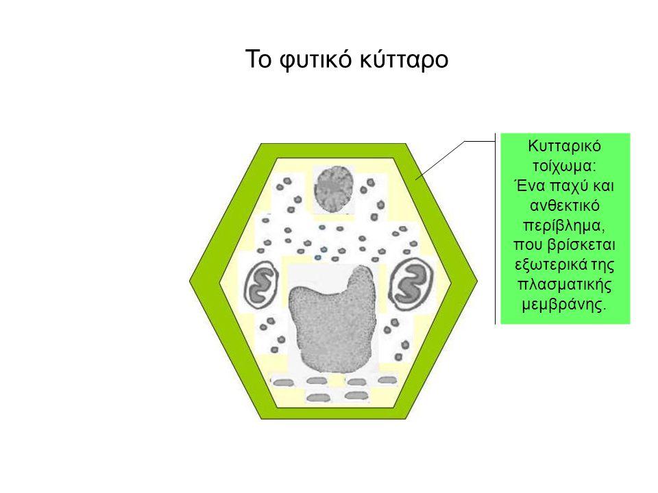 Κυτταρικό τοίχωμα: Ένα παχύ και ανθεκτικό περίβλημα, που βρίσκεται εξωτερικά της πλασματικής μεμβράνης.