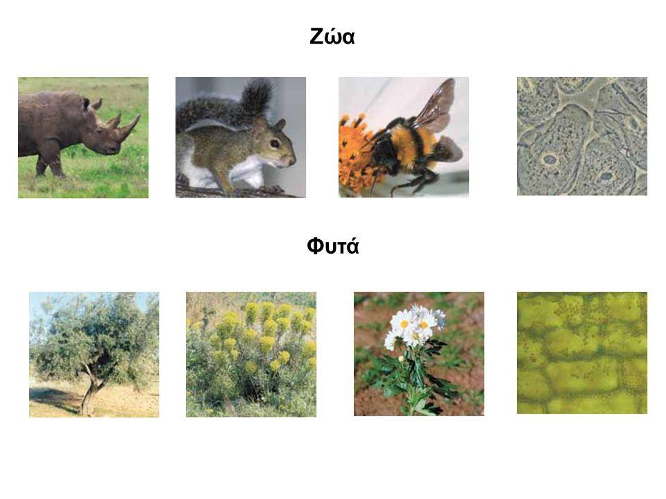 Ζώα Φυτά