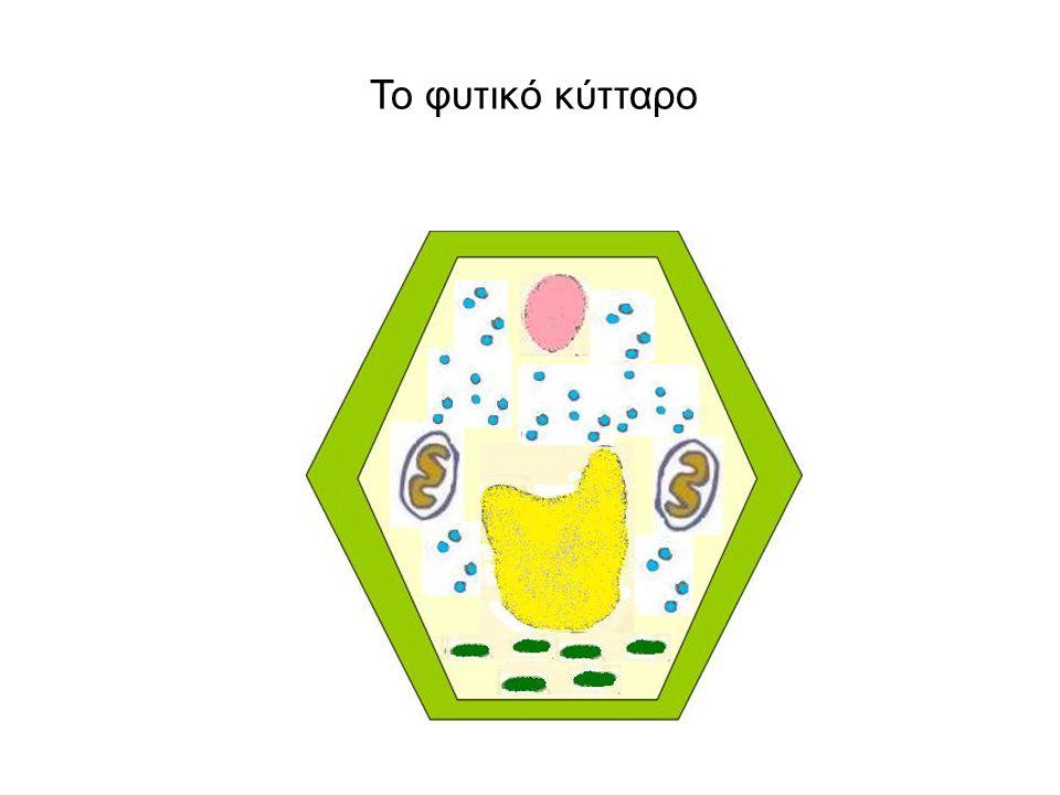 Το φυτικό κύτταρο