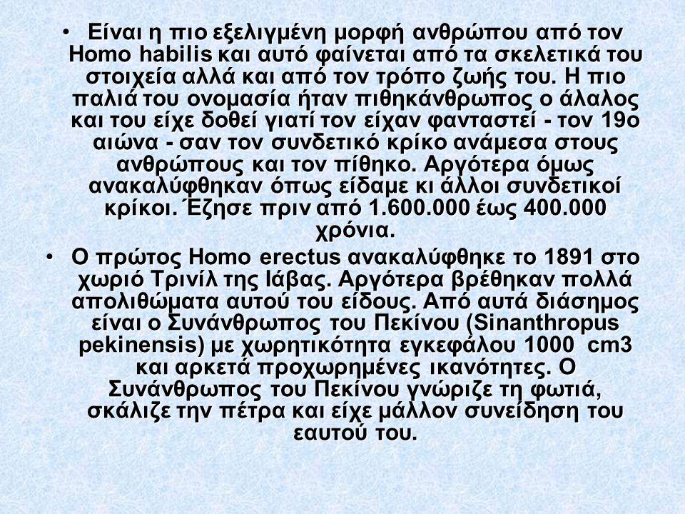 •Είναι η πιο εξελιγμένη μορφή ανθρώπου από τον Homo habilis και αυτό φαίνεται από τα σκελετικά του στοιχεία αλλά και από τον τρόπο ζωής του. Η πιο παλ