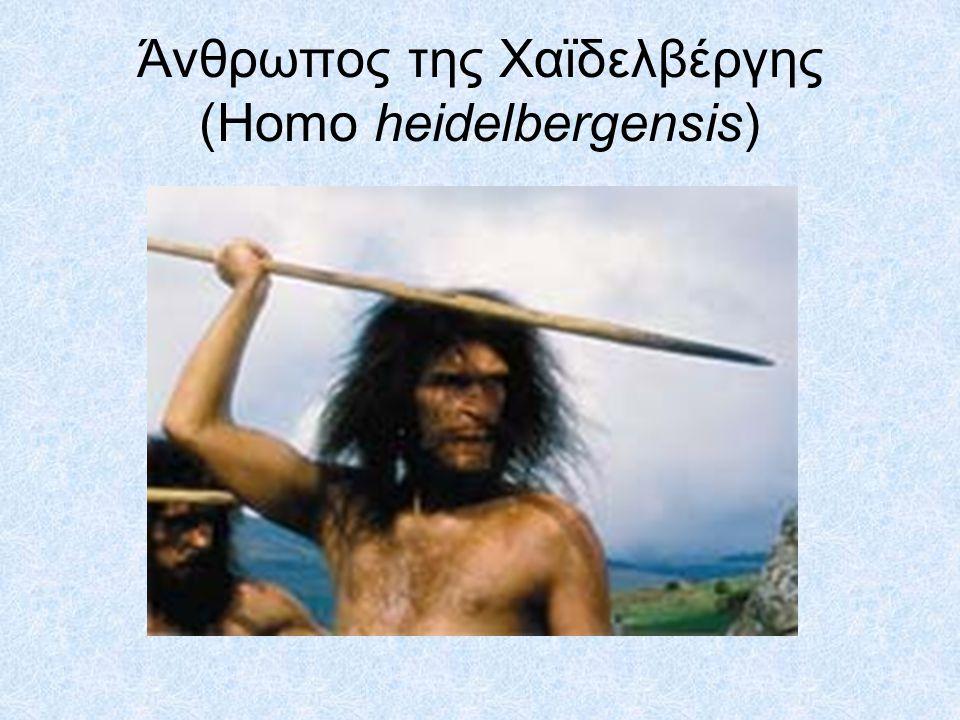 •Πολλοί παλαιοανθρωπολόγοι πιστεύουν ότι οι πρώτοι άνθρωποι μετανάστευσαν στην Ευρώπη πριν από 800.000 χρόνια, και ότι αυτοί οι πληθυσμοί δεν ήταν ο Άνθρωπος ο όρθιος (Homo erectus).