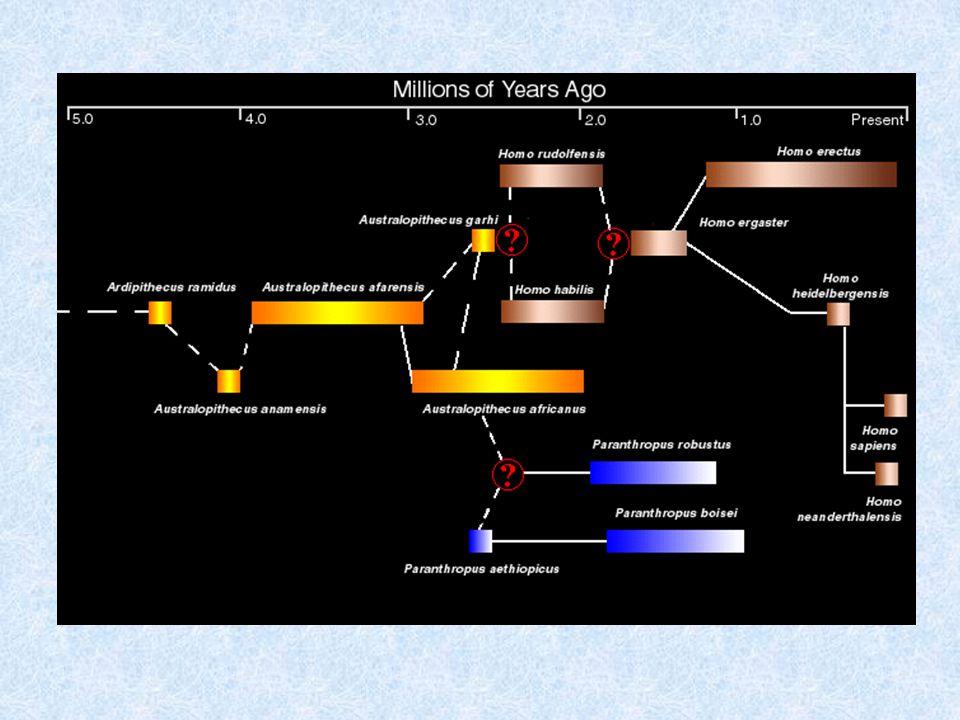 •Υπάρχουν τουλάχιστον τρεις διαφορετικές ιδέες για αυτά τα απολιθώματα.