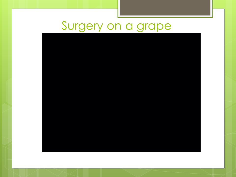 Surgery on a grape