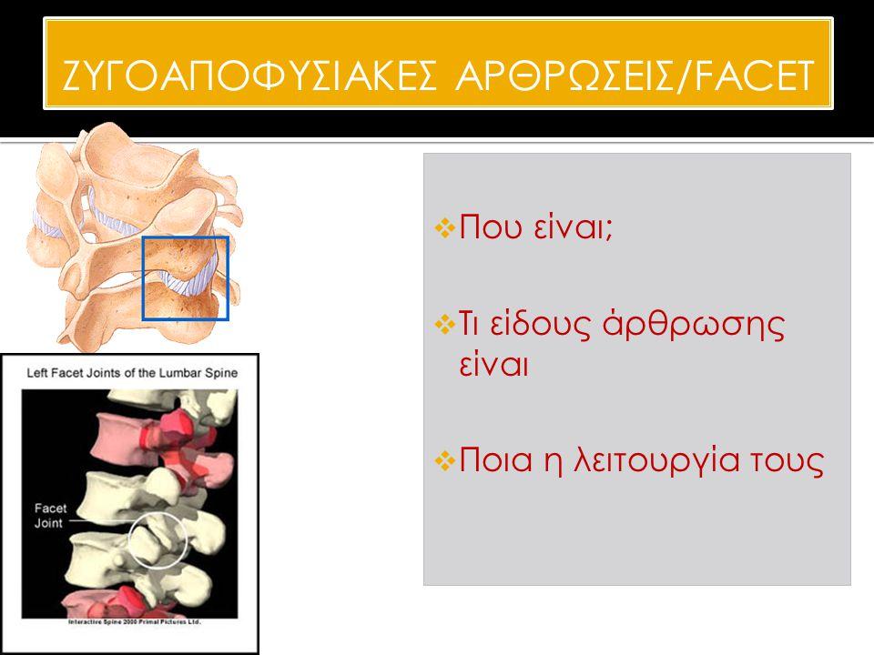 ΖΥΓOΑΠΟΦΥΣΙΑΚΕΣ ΑΡΘΡΩΣΕΙΣ/FACET  Που είναι;  Τι είδους άρθρωσης είναι  Ποια η λειτουργία τους