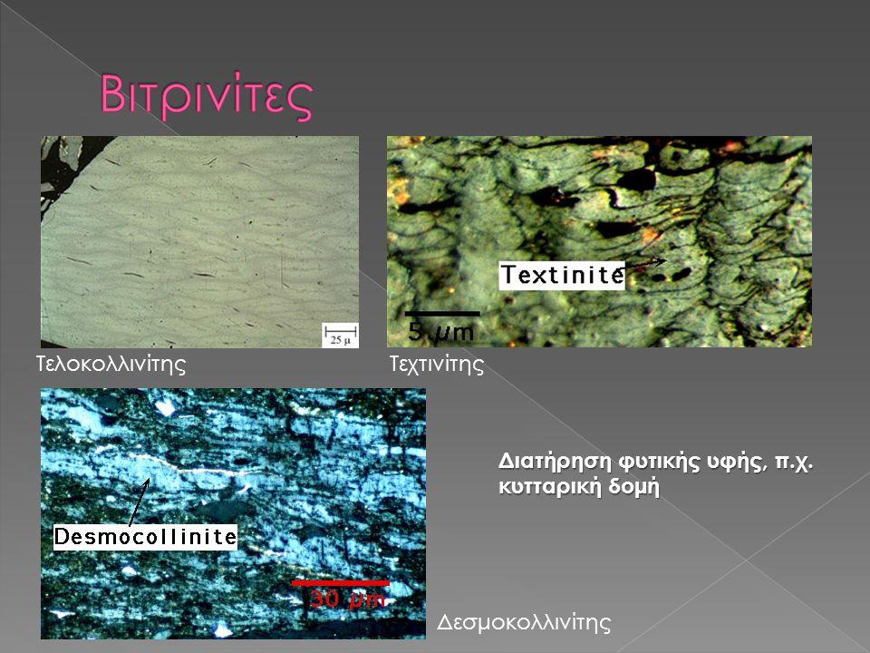 ΤελοκολλινίτηςΤεχτινίτης Δεσμοκολλινίτης Διατήρηση φυτικής υφής, π.χ. κυτταρική δομή