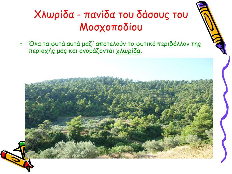 Χλωρίδα - πανίδα του δάσους του Μοσχοποδίου •Όλα τα φυτά αυτά μαζί αποτελούν το φυτικό περιβάλλον της περιοχής μας και ονομάζονται χλωρίδα.